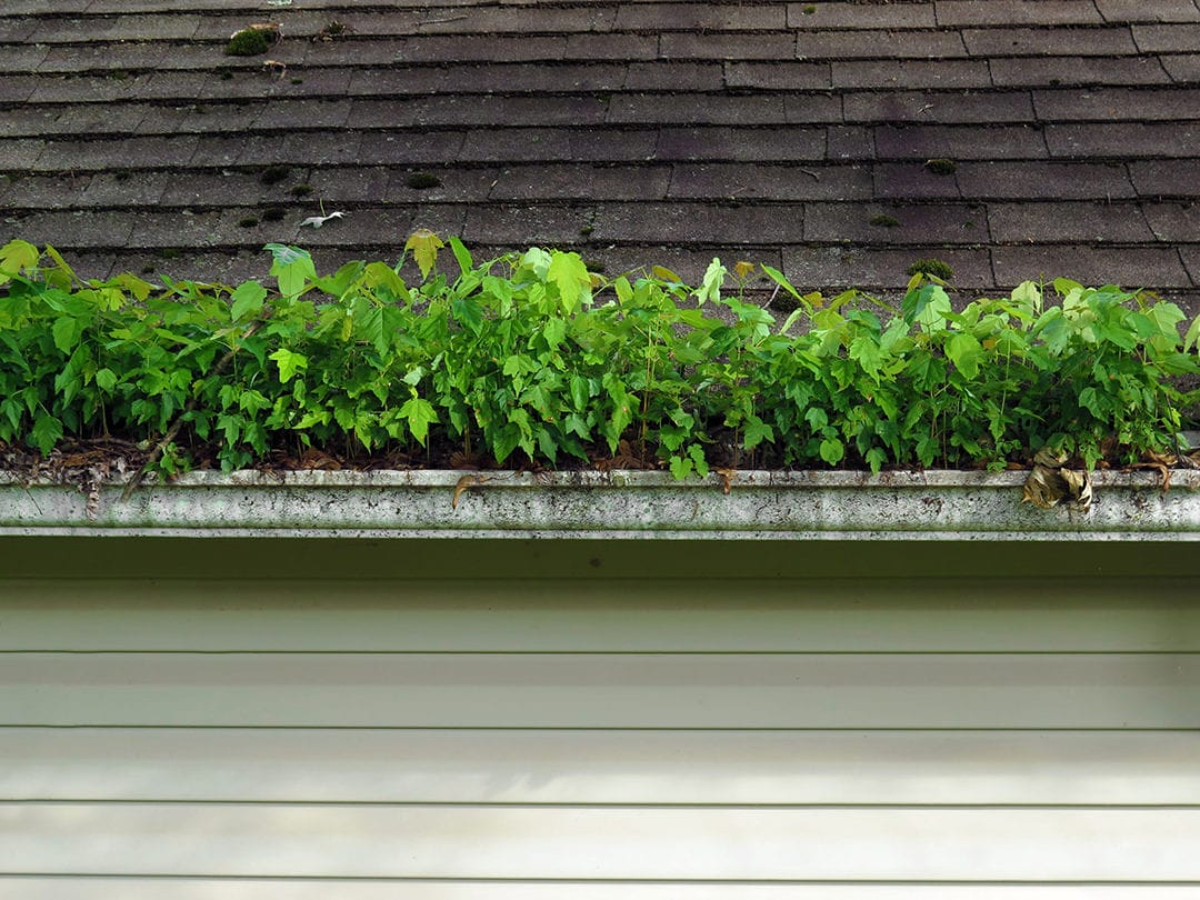 What Happens If I Don't Clean My Gutters?